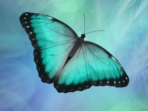 Oracle-Butterfly-Mosaic-Magazine